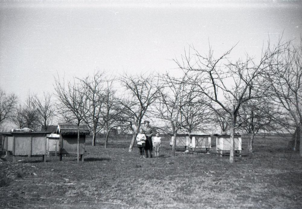 Stara fotografia naszej prababci stojącej w pasiece pomiędzy ulami w sadzie